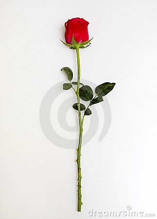 Free Rose Stock Images - 5057594