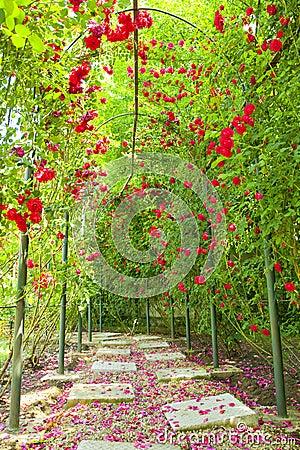 Rose arch in a garden