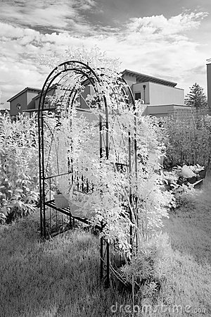Rose Arch Infrared