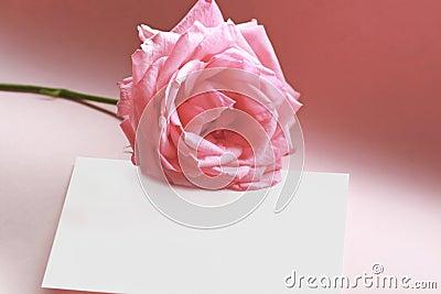 Rose auf einer Liebesanmerkung