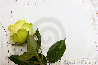 Rose on a blank leaf paper