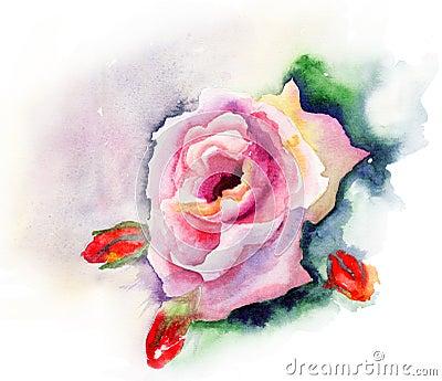 Rose blomma