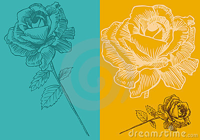 Rose Bloom Backgrounds