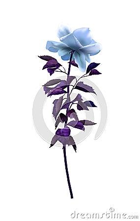 Free Rose Blue Stock Photo - 63189530