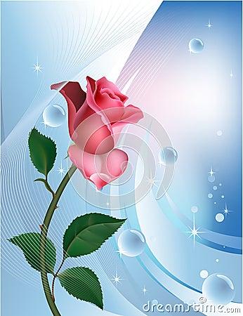 Rose on blue