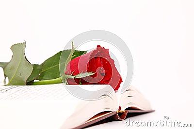 Rose & Book