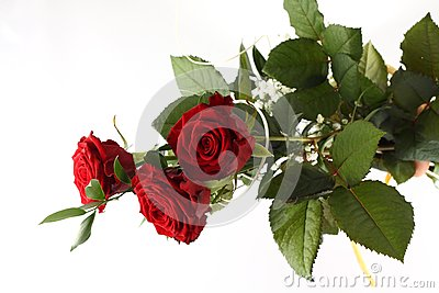 Rose bouquet on white background.