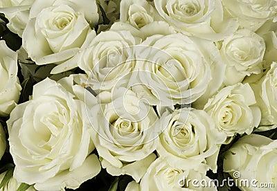 Rose bröllopwhite för bukett