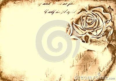 Rose bud on grunge background
