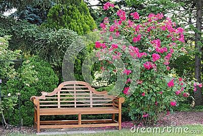 Rose Bush and a Garden Bench
