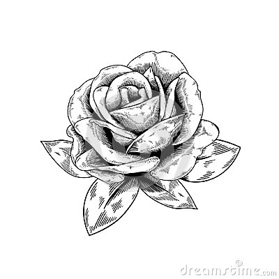 Free Rose Drawing Flower Nature Vector Icon On White Background Royalty Free Stock Image - 99342986