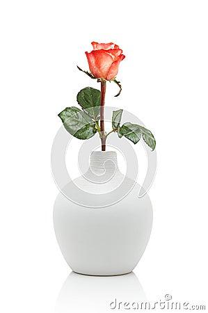 Rose en el florero blanco