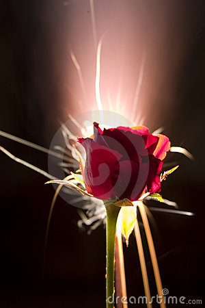 Rose With Firework Royalty Free Stock Images - Image: 494309