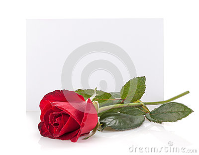 Rose flower and empty card