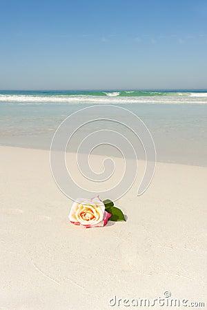 Rose Flower at tropical beach