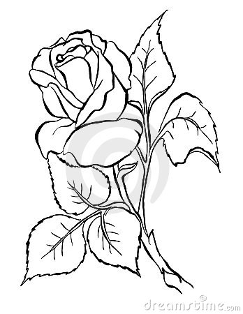 Rose. Freehand drawing.