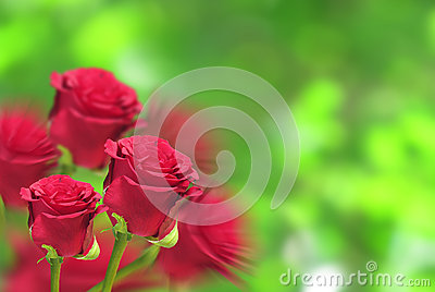 Rose garden background
