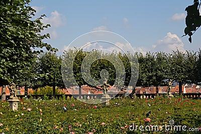 Rose garden in Bamberg
