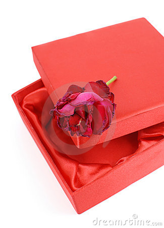 Rose on Gift Box