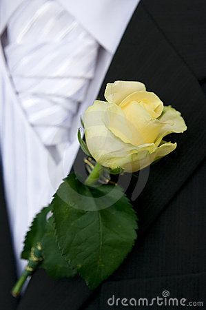 Rose on groom