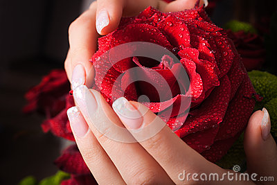 Rose in hands