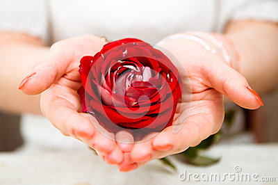 Rose In The Hands