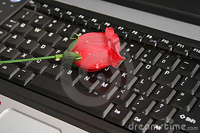 ROSE ON A LAPTOP