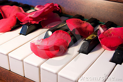 Rose leaves on the piano