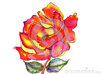 Rose and Leaves Watercolor