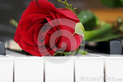 Rose lying on piano, romance