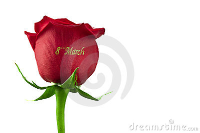 Rose March 8