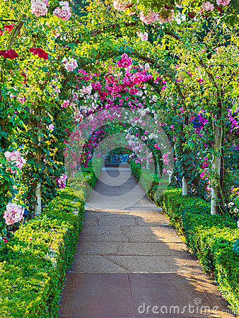 Free Rose Passage Royalty Free Stock Image - 43252326