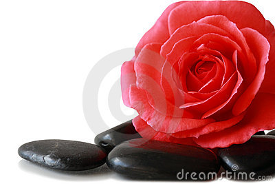 Rose and Pebble