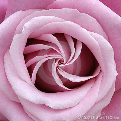 Rose Perfect Spiral