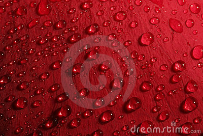 Rose petal droplets
