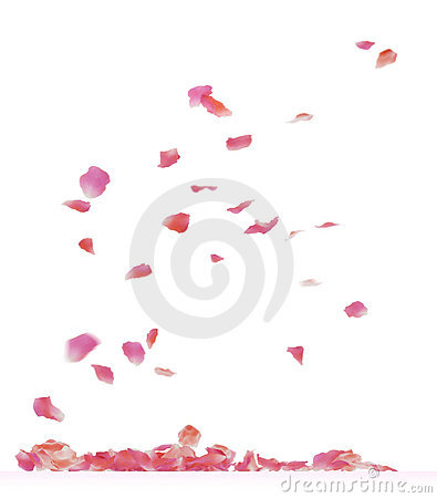 Free Rose Petals Royalty Free Stock Image - 17443006