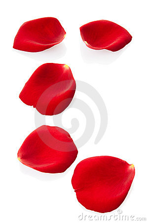 Free Rose Petals Royalty Free Stock Photos - 17588168