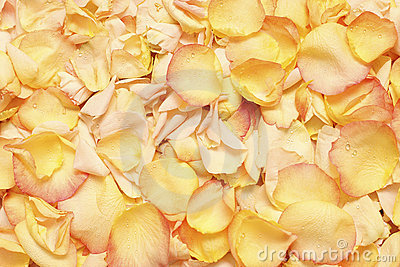 Rose Petals - background