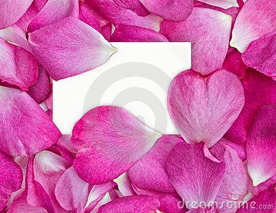 Rose petals with card