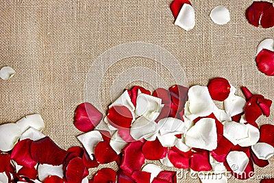 Rose Petals on Linen