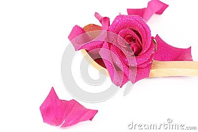 Rose-petals and rose