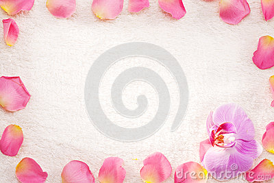 Rose petals on a white towel.