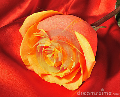 Rose on red silk