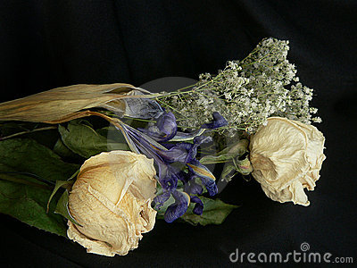 Rose roczne