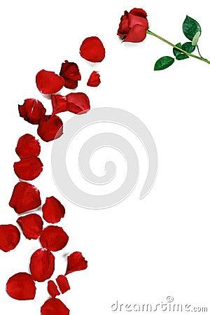 A rose and rose petals