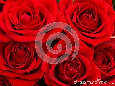 Rose rosse immagini stock immagine 88954 for Disegni del mazzo del secondo piano