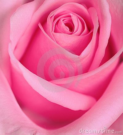 Rose Series