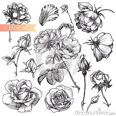 Free Rose Set. Royalty Free Stock Photos - 23044428