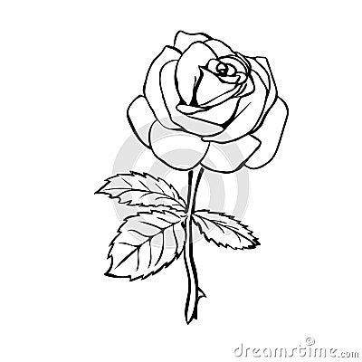 Stock Illustration Rose Sketch Black Outline White Background Vector Illustration Image51084886