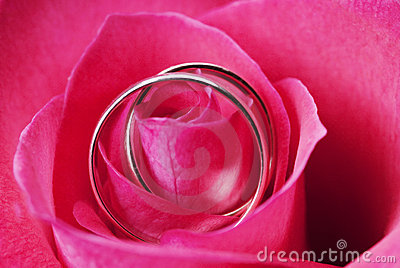 Rose with two wedding rings